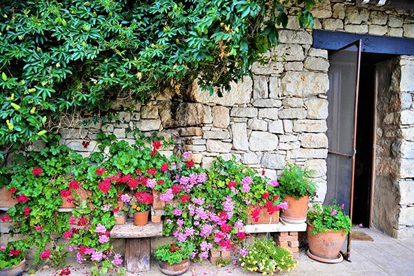 taş ev ilkbahar çiçekleri